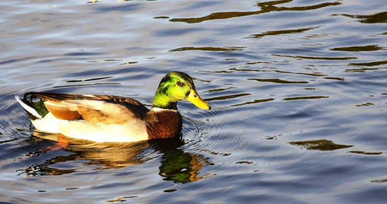 Guided Bird Walk – Wednesday March 11, 4-5pm